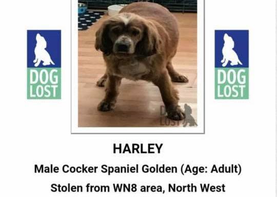 Harley is Missing!