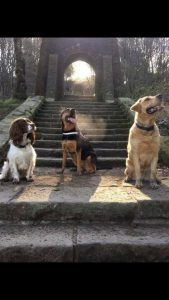 Findlay Pet Care